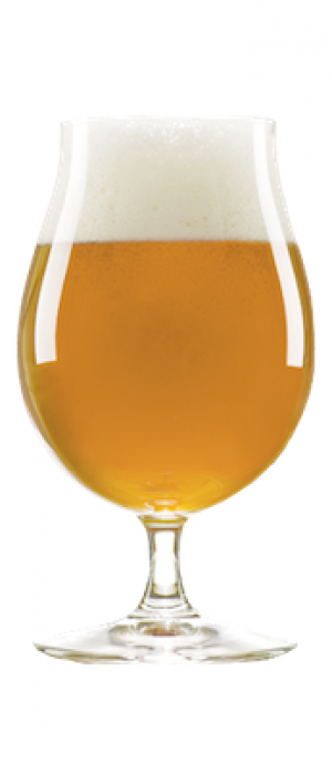 The Citizen by Cismontane Brewing Company in California, United States