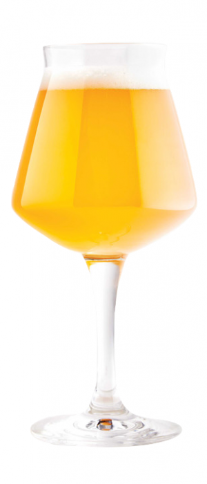 G4 Sour Golden Ale