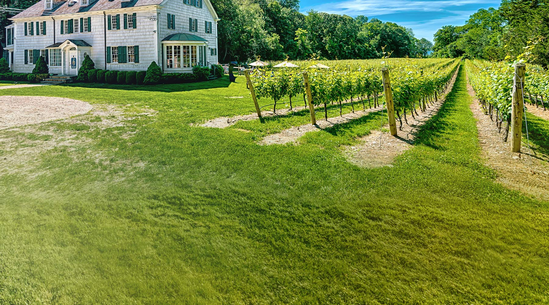 Harmony Vineyards | Just Wine