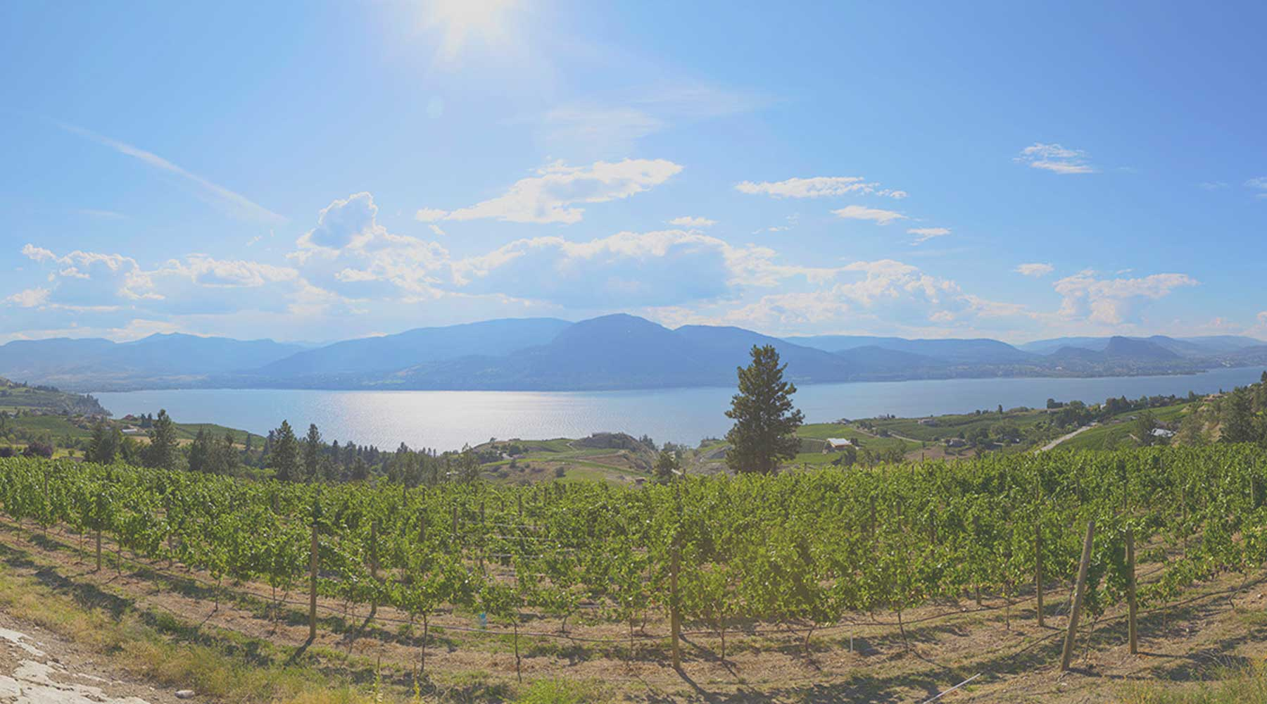 Kettle Valley Winery | Just Wine