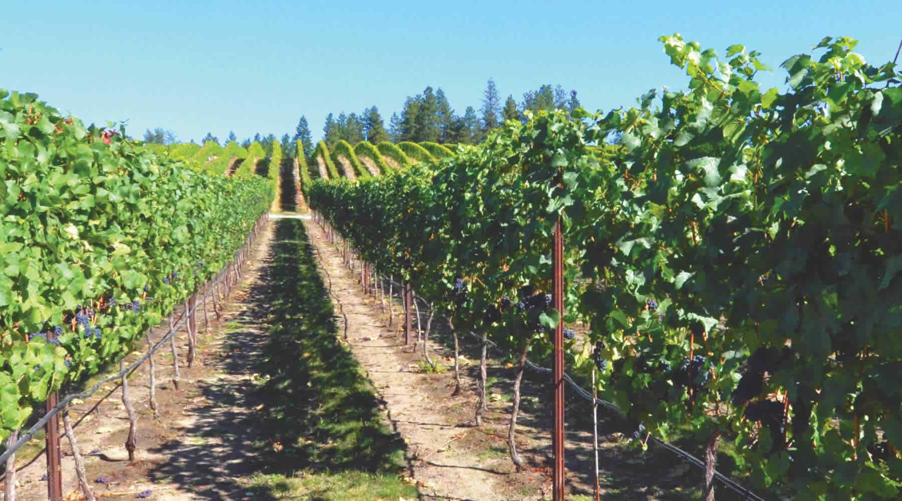 Hood River County Chamber of Commerce | Just Wine