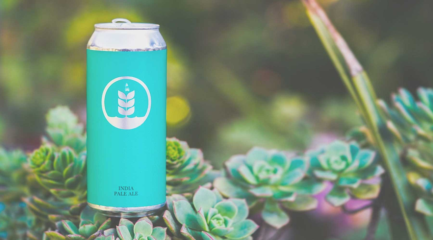 Pure Project Brewing | Just Wine