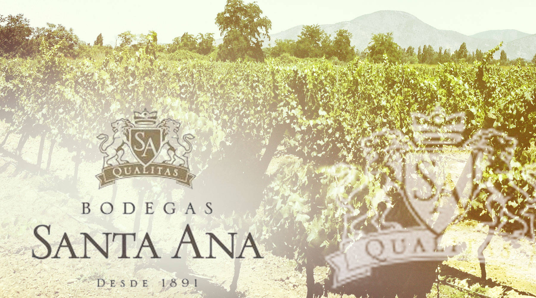 Bodegas Santa Ana | Just Wine